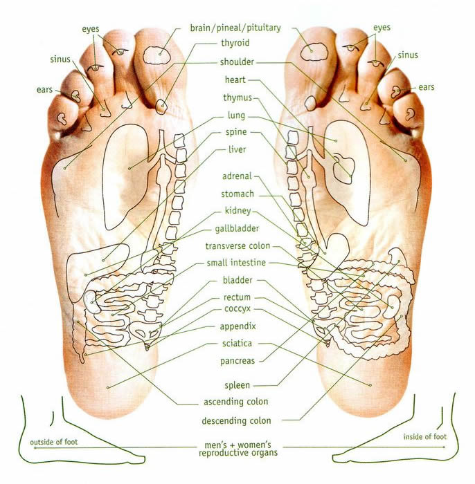 foot chart: Reflexology foot chart